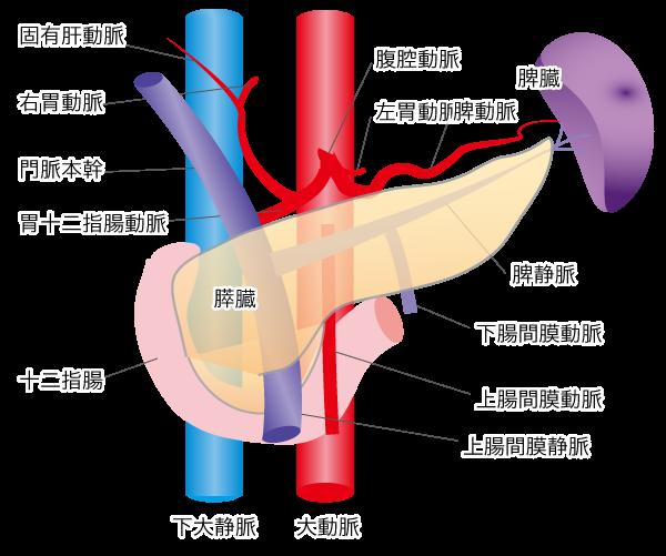 膵臓 癌 の 原因
