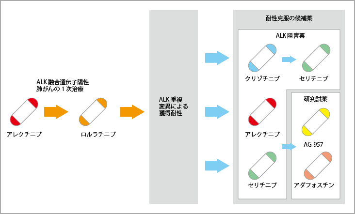 ALK重複変異と克服薬の可能性
