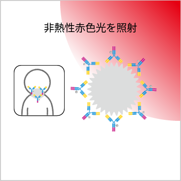 がん細胞に非熱性赤色光を照射