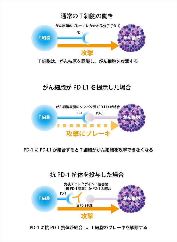 免疫 チェック ポイント 阻害 剤 免疫チェックポイント阻害薬 – がんプラス