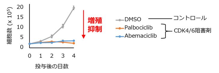 CDK4/6阻害剤